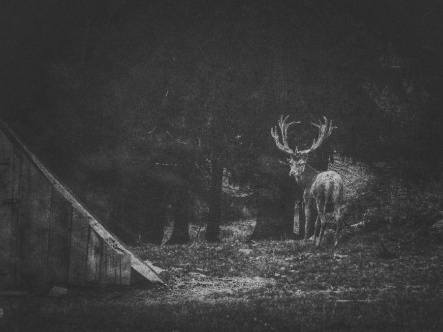 deer-nature-photo