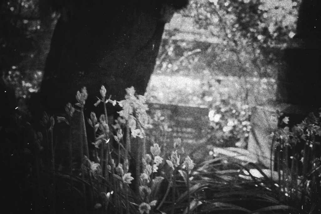 uncanny-figure-flowers-gothic-photography-analogue-historically-dark-faded