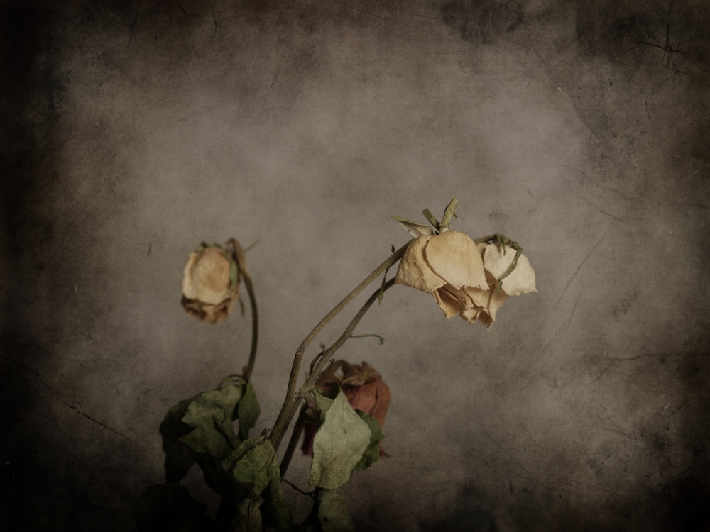 withered-flowers-decay-photography