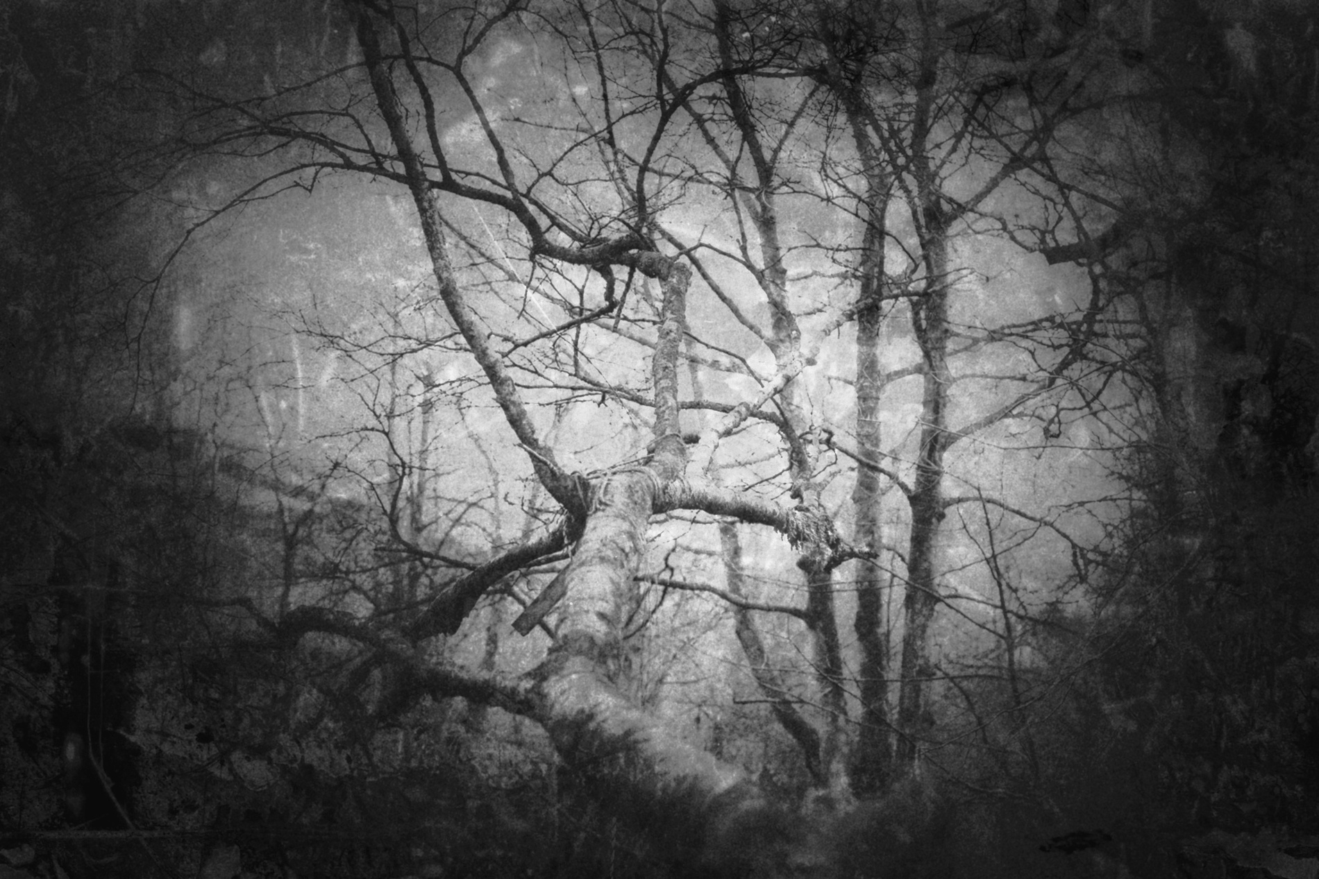 yorkshire-nature-bnw-tree-hebden-bridge-01