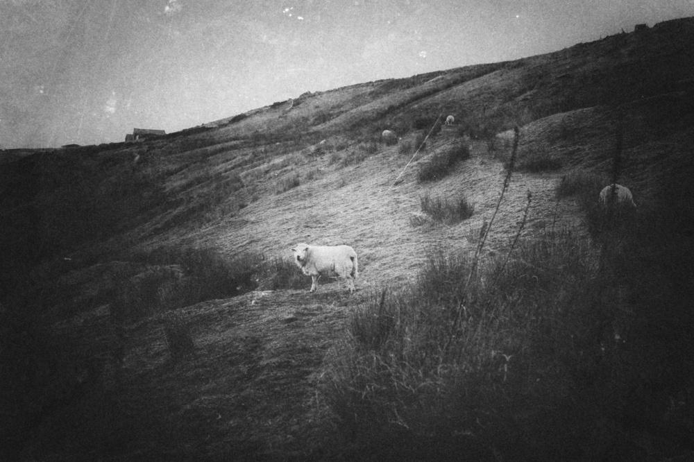 yorkshire-sheep-rural-photography-01
