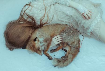 fine-art-photography-snow-fox
