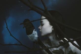 underwater-dark-photography-night-bird